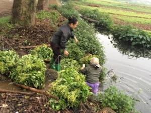 Sức khỏe đời sống - Hà Nội lập 5 đoàn kiểm tra an toàn vệ sinh thực phẩm