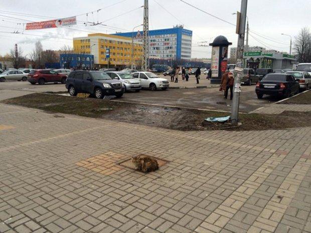 Mèo ngày ngày đến đúng chỗ bị chủ bỏ rơi suốt 1 năm - 1