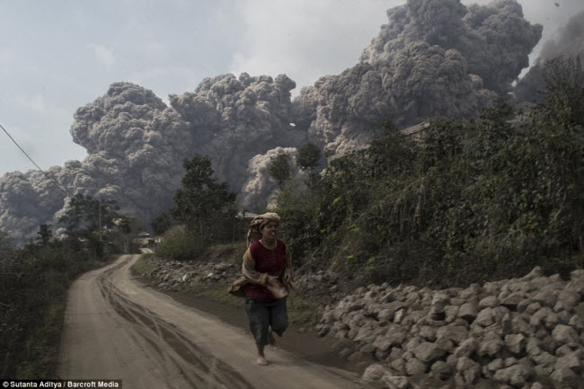 Từ khi hoạt động trở lại vào tháng 6.2010 cho đến nay, tro bụi từ núi lửa Sinabung đã khiến khoảng 30.000  người sống tại những ngôi làng xung quanh phải rời bỏ nhà của họ đi sơ tán.