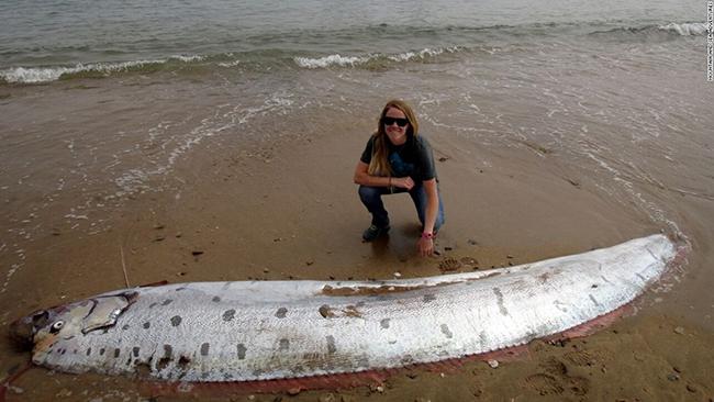 Oarfish được xem là loài cá dài nhất từ trước đến nay. Chúng có chiều dài trung bình khoảng 8m nhưng người ta đã từng nhìn thấy con cá dài tới 17m.