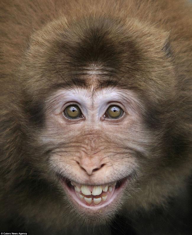 Khuôn mặt cười rạng rỡ của một chú khỉ tại vùng núi Hoàng Sơn ở Trung Quốc.