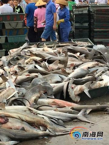 TQ: Hàng trăm cá mập đầu búa chất đống ở chợ, bán rẻ bèo - 2