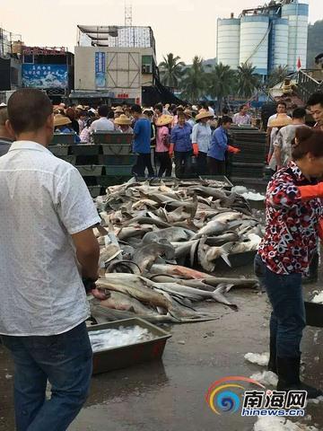 TQ: Hàng trăm cá mập đầu búa chất đống ở chợ, bán rẻ bèo - 4