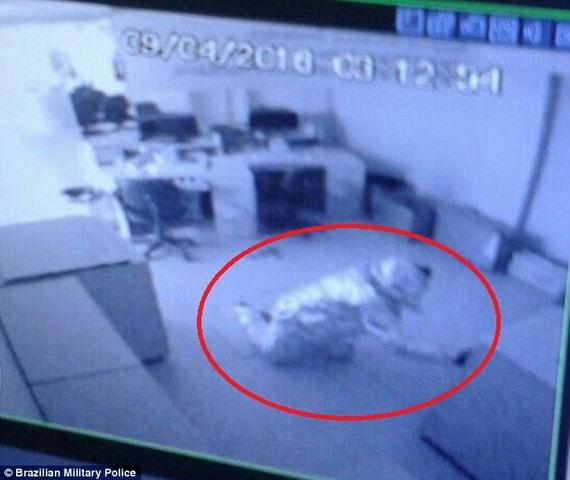 """Brazil: Hai tên trộm """"tàng hình"""" trước hệ thống báo động - 2"""