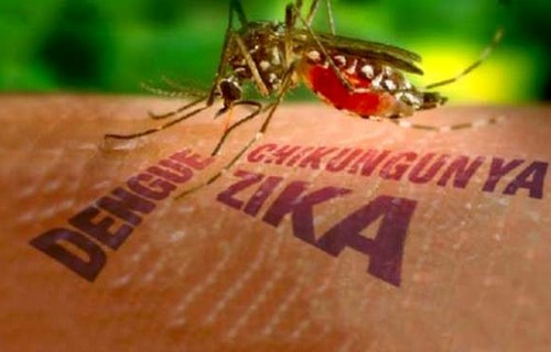 Phát hiện Virus Zika có thể tấn công cả não người lớn - 1