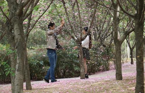 """""""Soái ca"""" rung cây cho hoa rụng để bạn gái chụp ảnh - 1"""