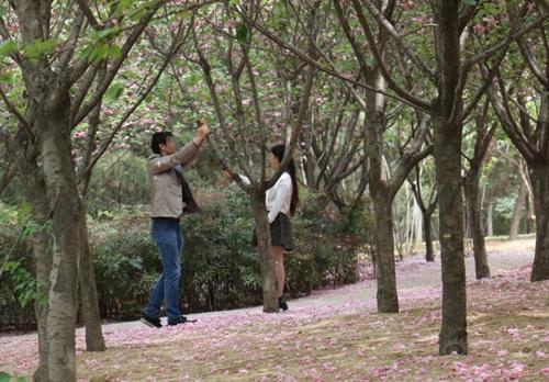 """""""Soái ca"""" rung cây cho hoa rụng để bạn gái chụp ảnh - 2"""