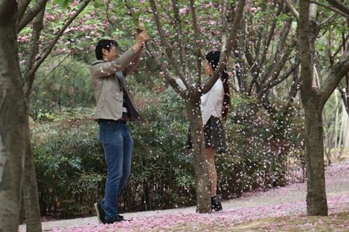 """""""Soái ca"""" rung cây cho hoa rụng để bạn gái chụp ảnh - 3"""