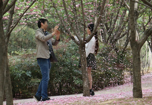 """""""Soái ca"""" rung cây cho hoa rụng để bạn gái chụp ảnh - 5"""