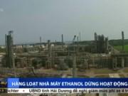 Thị trường - Tiêu dùng - Hàng loạt nhà máy Ethanol dừng hoạt động do nợ đọng, phá sản