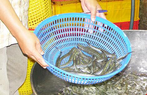 Cá và khô cũng nhiễm chất cấm - 1
