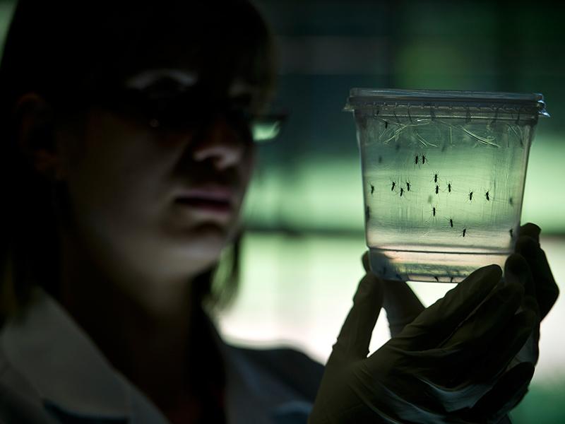 Virus Zika không chỉ gây teo não - 3