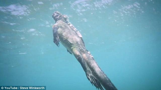 """Video: Ngắm """"Godzilla dưới biển"""" bơi lượn như rắn - 1"""