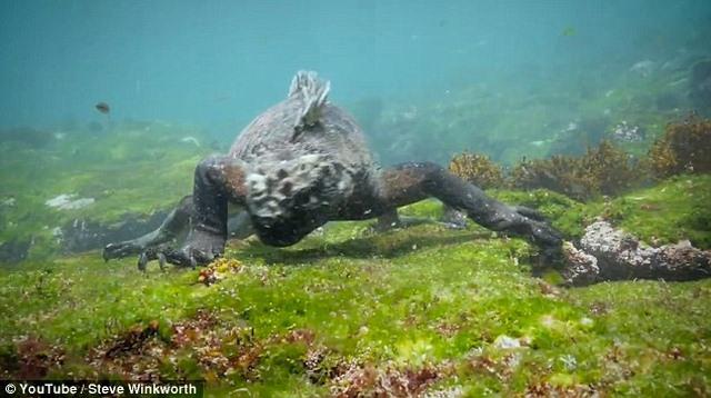 """Video: Ngắm """"Godzilla dưới biển"""" bơi lượn như rắn - 2"""