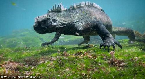 """Tìm thấy """"hậu duệ"""" của quái vật Godzilla huyền thoại? - 1"""