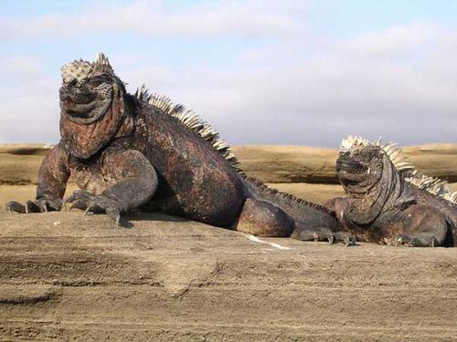 """Tìm thấy """"hậu duệ"""" của quái vật Godzilla huyền thoại? - 4"""