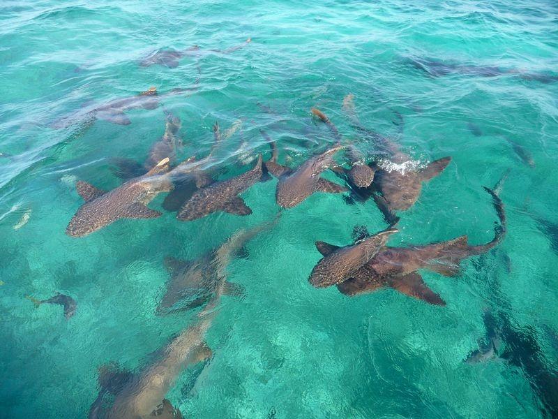 Nơi con người thoải mái bơi cùng cá mập - 4