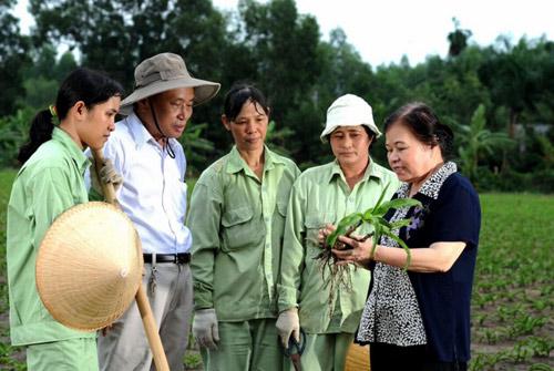 Chỉ 3/84 mẫu sản phẩm từ cây trinh nữ hoàng cung đạt tiêu chuẩn - 4