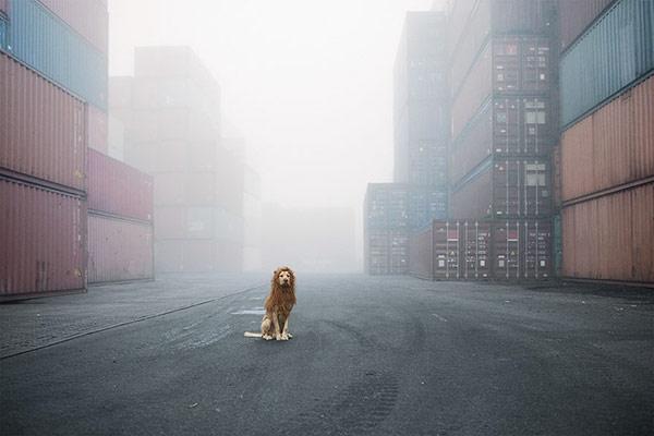 Mê tít bộ ảnh chó vô gia cư hùng dũng như Chúa sơn lâm - 1