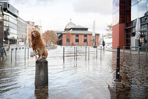 Mê tít bộ ảnh chó vô gia cư hùng dũng như Chúa sơn lâm - 2