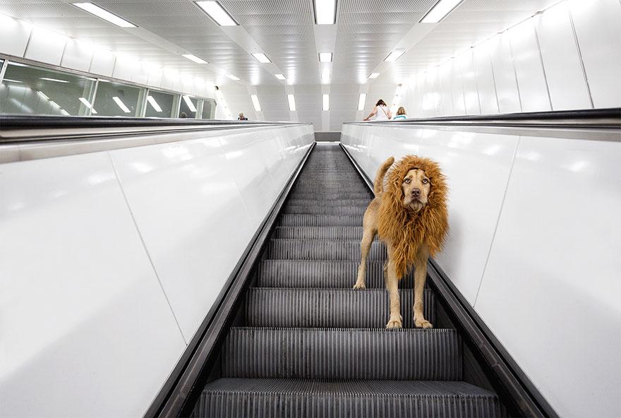 Mê tít bộ ảnh chó vô gia cư hùng dũng như Chúa sơn lâm - 6