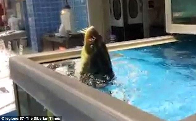 """Video: Cá """"đứng"""" thẳng như người, nhảy nhót theo nhạc - 2"""