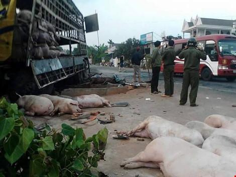 Gần 100 chú heo nằm chết la liệt sau vụ tai nạn - 4