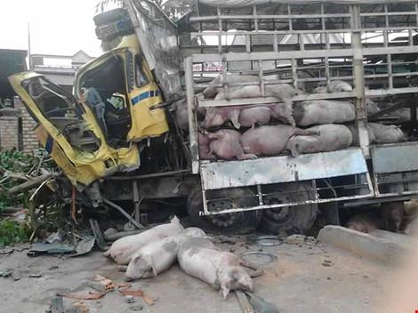 Gần 100 chú heo nằm chết la liệt sau vụ tai nạn - 7