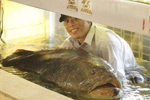 """Cá mú nghệ """"khủng"""" vẫy vùng tại Sài Gòn - 1"""