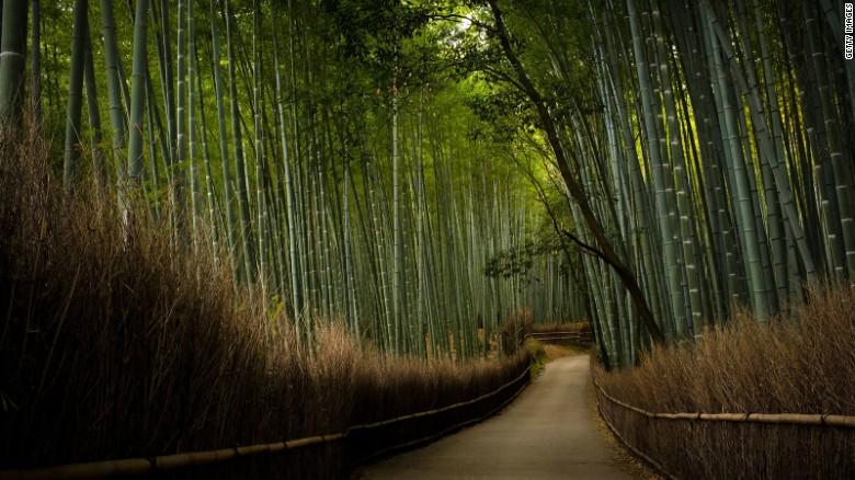 Chiêm ngưỡng những tuyệt tác đền, chùa ở Nhật Bản - 12
