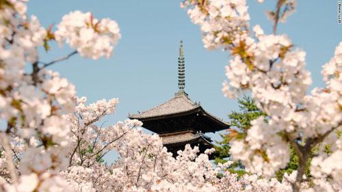 Chiêm ngưỡng những tuyệt tác đền, chùa ở Nhật Bản - 8