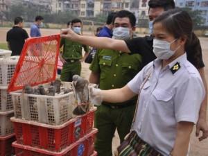 Gần 4.000 con chim bồ câu Trung Quốc tuồn về Hà Nội