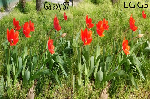 So sánh camera của Galaxy S7 với LG G5 - 6