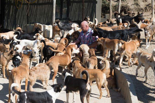 Người đàn ông ở trong chuồng cùng 150 con chó - 1