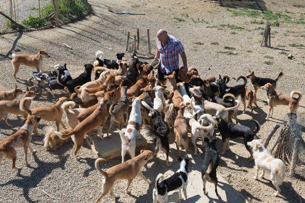 Người đàn ông ở trong chuồng cùng 150 con chó - 4
