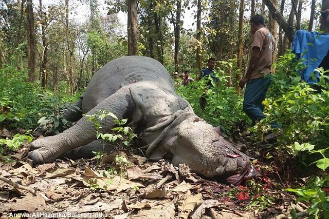Tê giác bị bắn chết dã man sau khi Công nương Anh cho ăn - 2