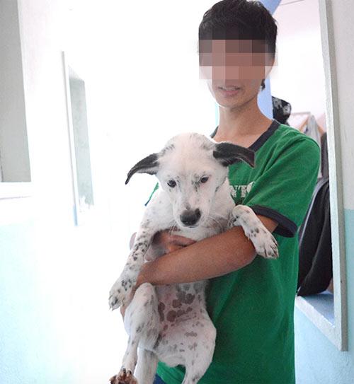 Trạm cứu hộ chó mèo Đà Nẵng: Người bị tố cáo lên tiếng - 3