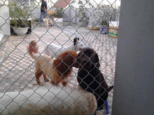 Trạm cứu hộ chó mèo Đà Nẵng: Người bị tố cáo lên tiếng - 4