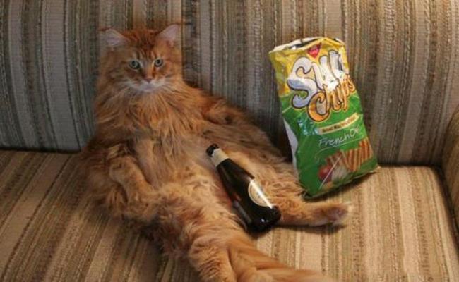 Có bia có mồi rồi, nhậu thôi nào.