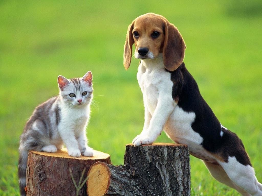 Lý giải ý nghĩa giấc mơ về chó, mèo trong dân gian - 1