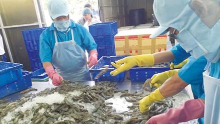 Dùng chất cấm trong thủy sản: Hám lợi trước mắt, trả giá dài lâu - 1