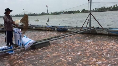 Dùng chất cấm trong thủy sản: Hám lợi trước mắt, trả giá dài lâu - 2