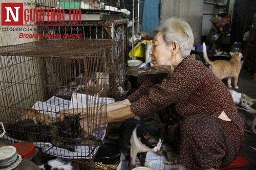 """Cụ bà """"sức cùng lực kiệt"""" chăm bầy chó mèo hoang - 5"""