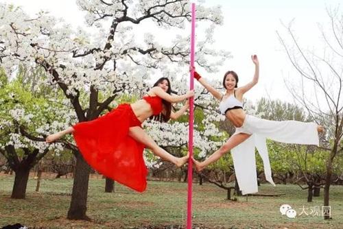 Thiếu nữ  ăn mặc hở hang múa cột giữa rừng hoa lê - 2