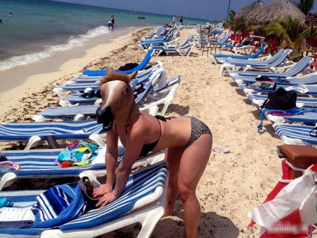 """Ô hay,  """" ngựa """"  ở đâu mà lại lạc vào bãi biển thế này."""