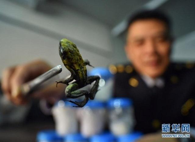 TQ: 10 con ếch có nọc cực độc ẩn trong kiện quần áo - 1