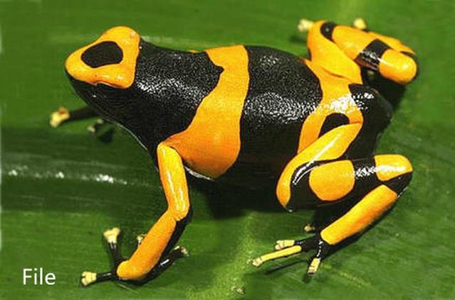 TQ: 10 con ếch có nọc cực độc ẩn trong kiện quần áo - 3