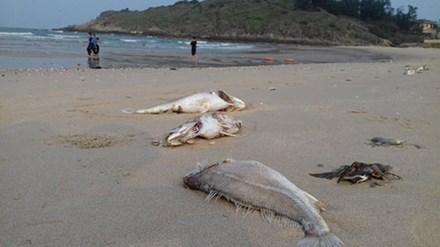 Ngư dân đưa thuyền lên bờ vì cá biển chết hàng loạt - 1