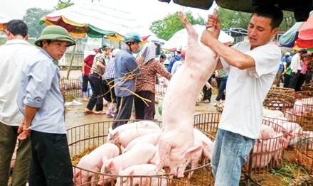 """Ồ ạt xuất khẩu lợn sang TQ: Coi chừng """"dội biên"""" như dưa hấu - 1"""