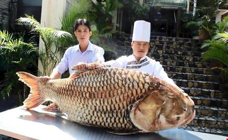 """Cá hô """"khủng"""" hơn 1 tạ ở Campuchia về nhà hàng Sài Gòn - 1"""